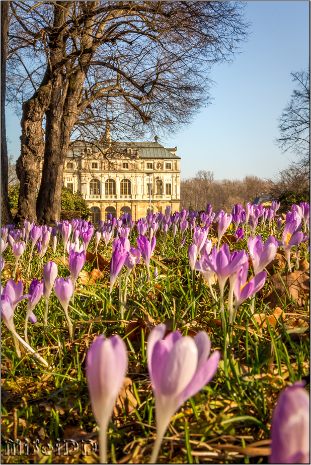 Frühling am Palais