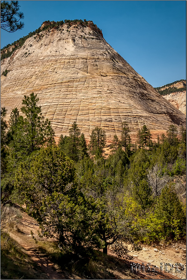 Checkerboard Mesa - Zion Nationalpark